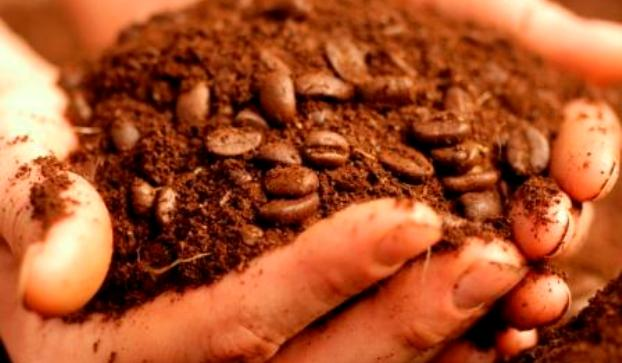 how to use coffee grounds to remove odor